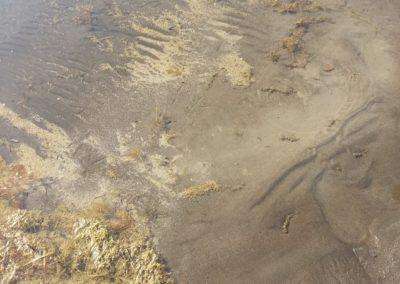 Le alghe strappate dal fondo