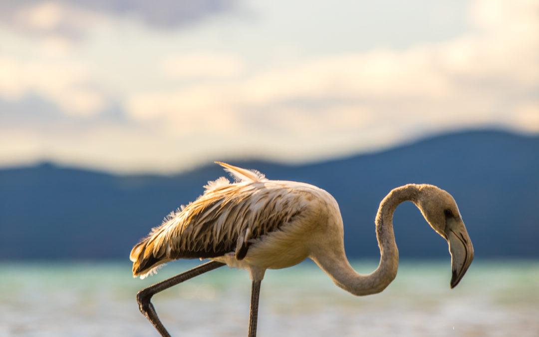 Mattia Azzella: il lago non scompare, ma rischia di morire