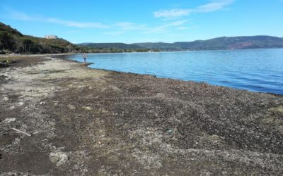Ispra: le alghe spiaggiate posso causare un ulteriore danno, vanno rimosse