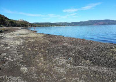 Spiaggiamenti di alghe in secca