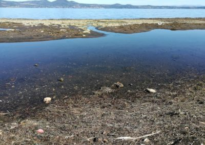 Spiaggiamenti alghe