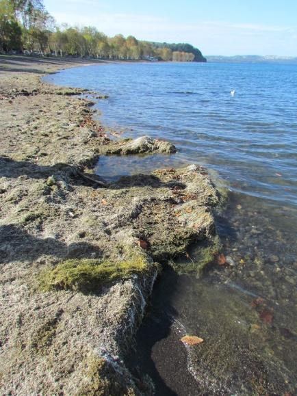 Al via operazioni rimozione alghe