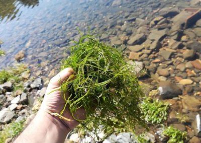 Il campione di alghe affiorate