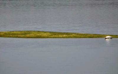 Le alghe hanno già cominciato ad affiorare